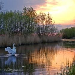 Zonsondergang met zwaan