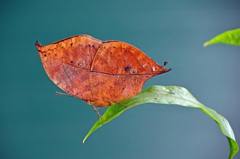 Vliegend blad