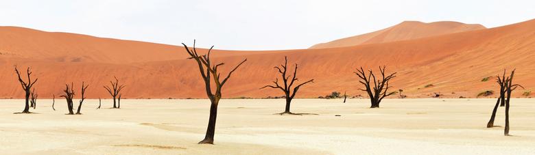 Deadvlei - Panorama - Deadvlei in de Namibische woestijn. De rode zandduinen steken af teken de witte kleibodem van een opgedroogd meer, met daarin do