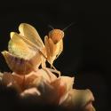 Bidsprinkhanen en andere kleine huisdiertjes