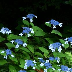 Bewerking: Blauw en wit