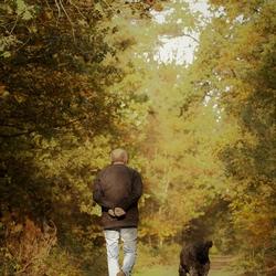 Bos wandeling