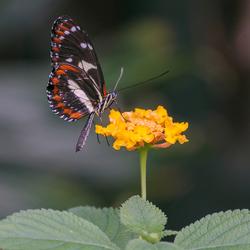 Vlinders aan de Vliet