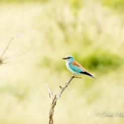 Schitterende kleuren van het vogeltje