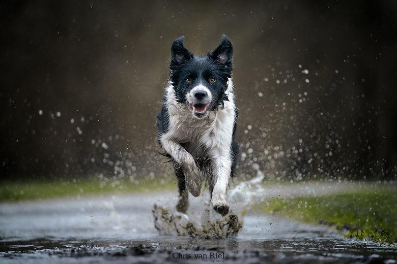 Hondenweer -