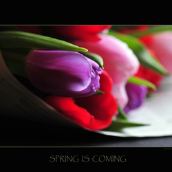 Spring is coming-3