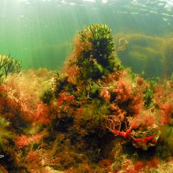 Onderwater natuur in nederland