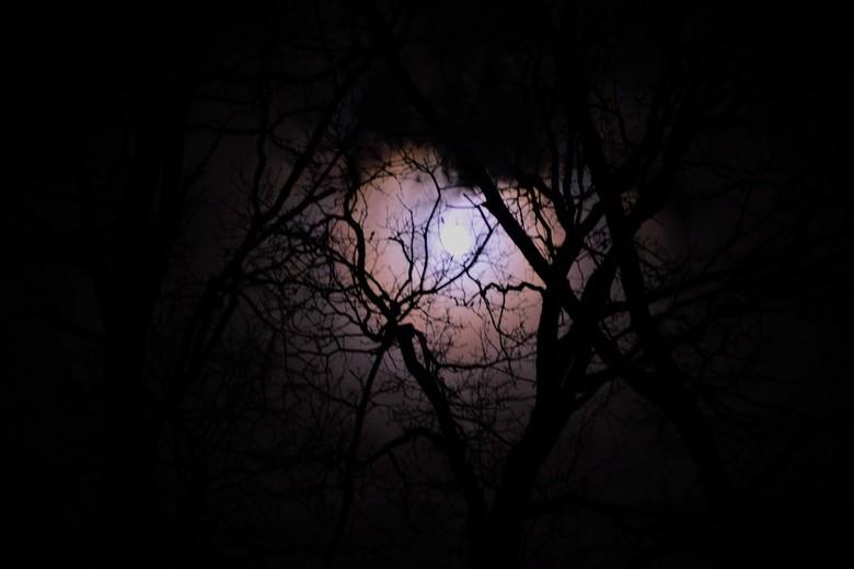 DSC_0016 - Maan,bewerkt purple, door de takken van een boom.
