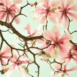 Magnolia creatief