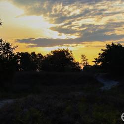 Brunssummerheide net na zonsopkomst.