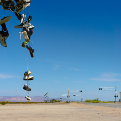 Shoe tree Mojave desert