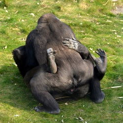 Sex in the zoo..........