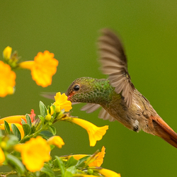 Hummingbird Hunting 3