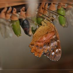 Vlindertuin Berkenhof 8