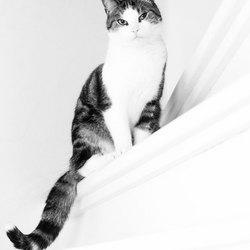 Sammy de kat