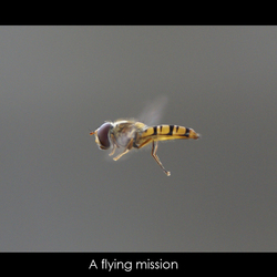 Flying Mission