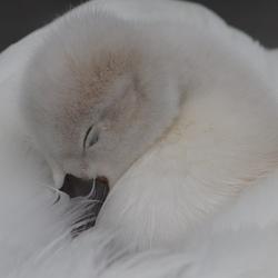 hoe lekker kan je slapen?