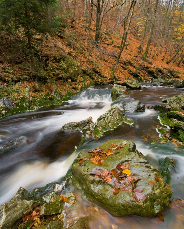 Herfst in de Ardennen - Nog een foto uit de Ardennen in herfstsfeer. Waarbij ook weer gebruik is gemaakt van een grijsfilter.