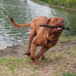 Baloe rennend