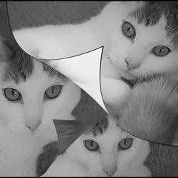 nieuwsgierige katjes..................