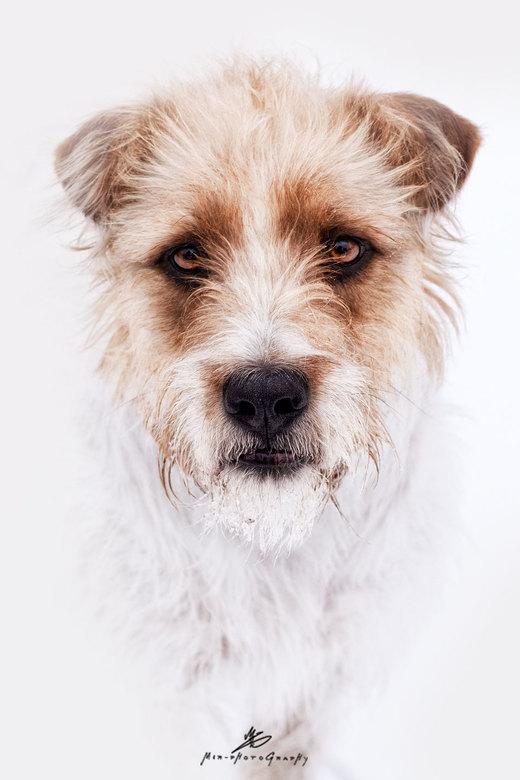 Dog Portrait -