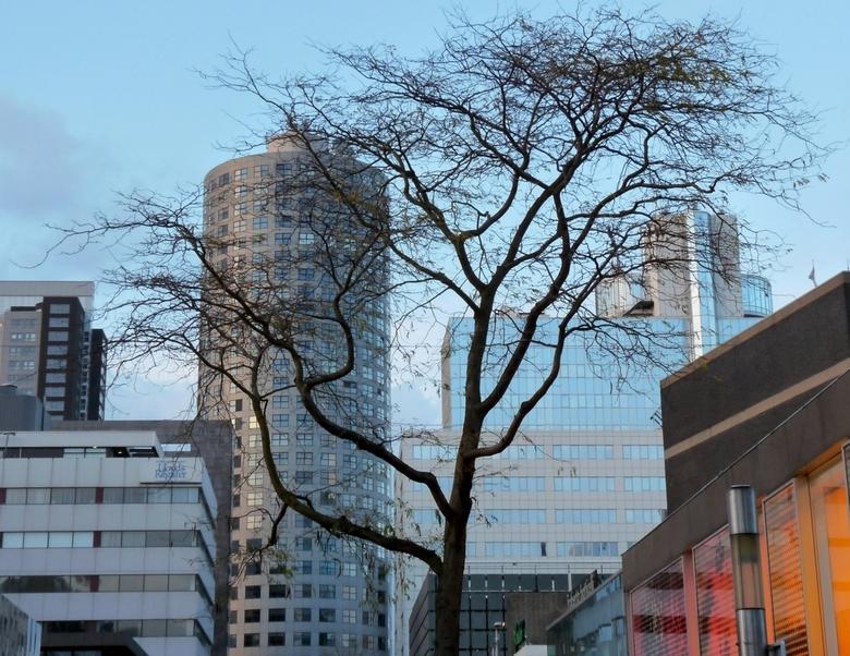 Natuur in de stad - De tegenstellingen hier spraken me aan: de grillige takken van de boom tegenover de strakke gebouwen erachter; de tegenstelling tu