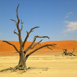 Dead valley Sossusvlei Namibië