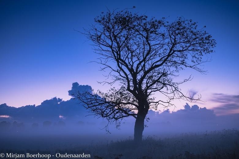 Goeiemorgen boom - Elke werkdag rijd ik twee keer langs deze boom. Hij staat daar zo eenzaam aan de weg en er zitten ook niet zo veel blaadjes meer aa