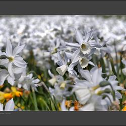 Een wit voorjaar