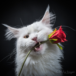 Cat'chy Images - Can I be your Valentine?