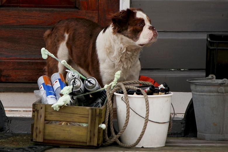 A Dog's Life - Op een oude boot, een emmer met tube&#039;s<br /> pur schuim en lege flessen bewaken.<br /> Shit happens !!!