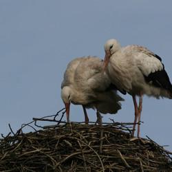 Inspectie van het nest