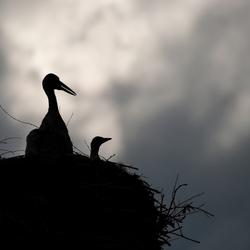 In het nest