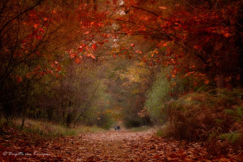 Path to the unknown - Vandaag heerlijk in het bos gewandeld met Karin (Kariver).<br /> De verkleuring gaat nu rap en er is al veel eikeblad gevallen.