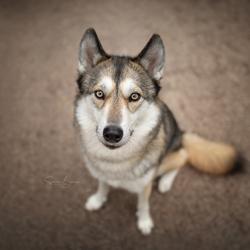 Eenvoudig hondenportret