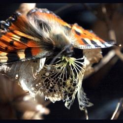 Dode vlinder op dode bloem