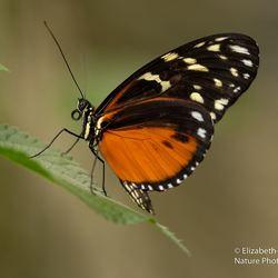 Oranje schoonheid