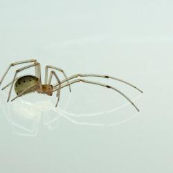Spinnetje in de schijnwerpers