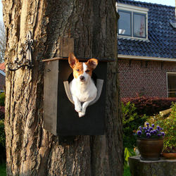hond in boom....