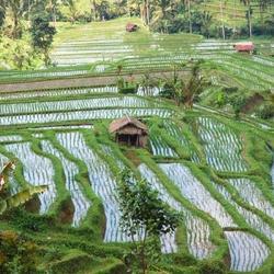Ubut - Bali