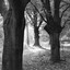 Doorkijk tussen bomen