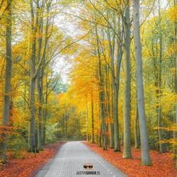 Herfstbos op Texel.