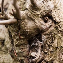 Sprookjesfiguur in het bos