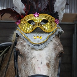 Parade paardje