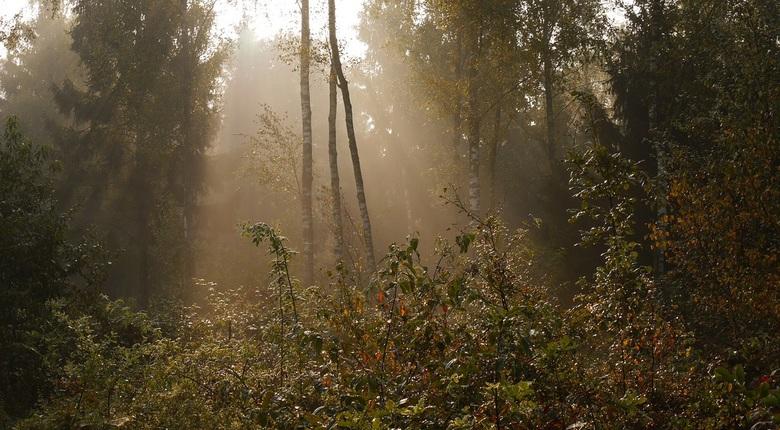 Ochtend Mist - De zon breekt door voor weer een prachtige nazomer dag in oktober.