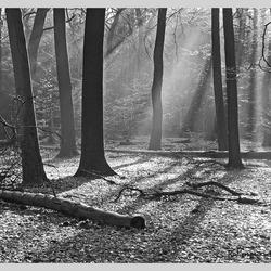 Bewerking: Zonlicht in het bos.