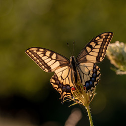Open vleugels