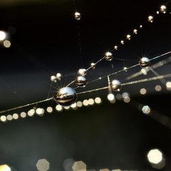 Druppels in een spinnenweb