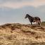 Paard met pasgeboren veulen 2