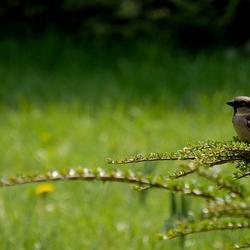 Lente in de tuin...